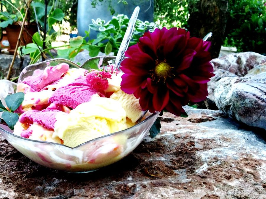 Ice Cream Delicious Cousin Stone Life The Secret In Orange EyeEm Best Shots - Landscape EyeEm Nature Collection EyeEm Best Shots - Nature EyeEmNewHerе Humaninterest EyeEmbestshots The Week On EyeEm EyeEm Selects EyeEm Best Shots EyeEm Gallery Lifeisbeautiful Nature Photography Nature_collection Beauty In Nature Been There. Perspective Flowers, Nature And Beauty Human Shapes In Nature EyeEmNewHere
