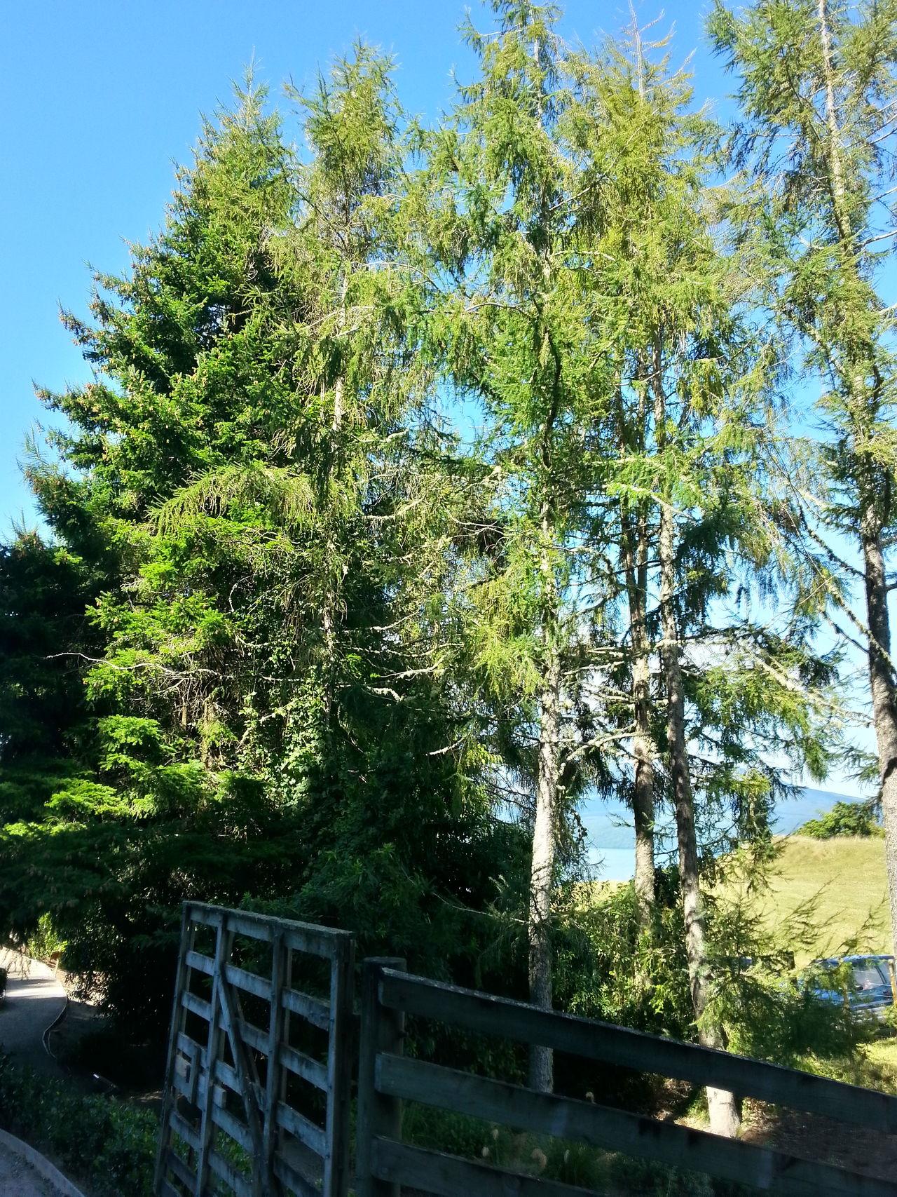 Autumn in New Zealand. New Zealand Scenery Trees