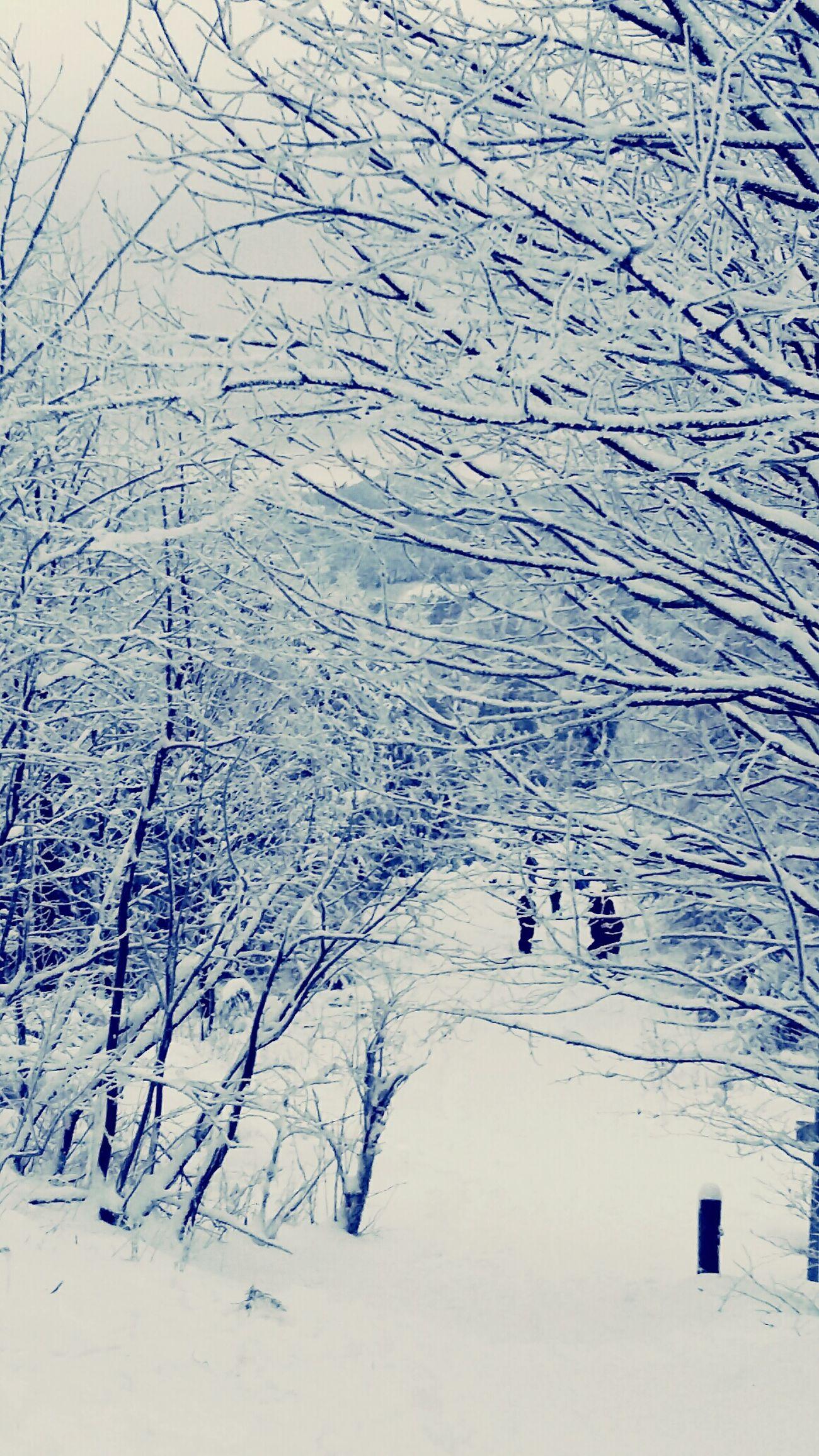 Shades Of Blue Winter 2016 Winterwonderland Winter B&w Street Photography My Best Photo 2015 Black And White Wintertime Germany Sachsen Snow Snow Day Snowing ❄ Winterwalk Winterwald