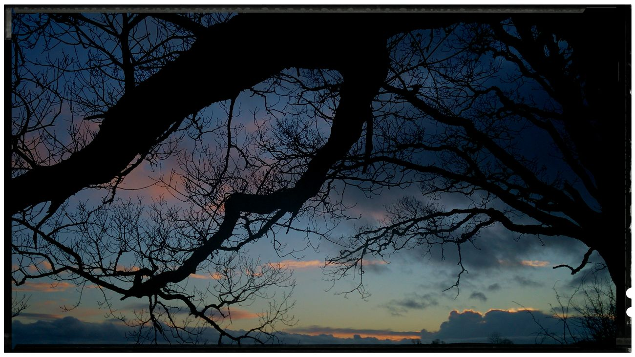 tree and sunset Enjoying The Sun Our Sky! Taking Photos Picturesque