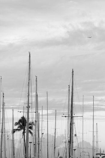 Waikiki Beach Monochrome Mast Hawaii