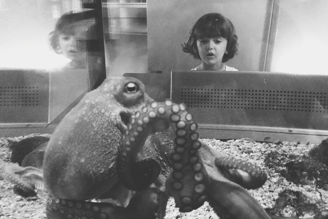 Octopus. Barcelona Animal Themes Indoors  Octopus Nature Barcelona, Spain Animal Wildlife Portrait