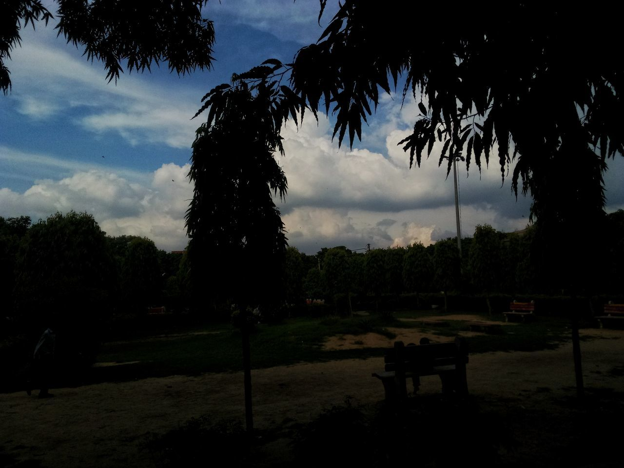 tree, sky, cloud - sky, tranquility, palm tree, no people, nature, outdoors, beauty in nature, scenics, growth, day, grass