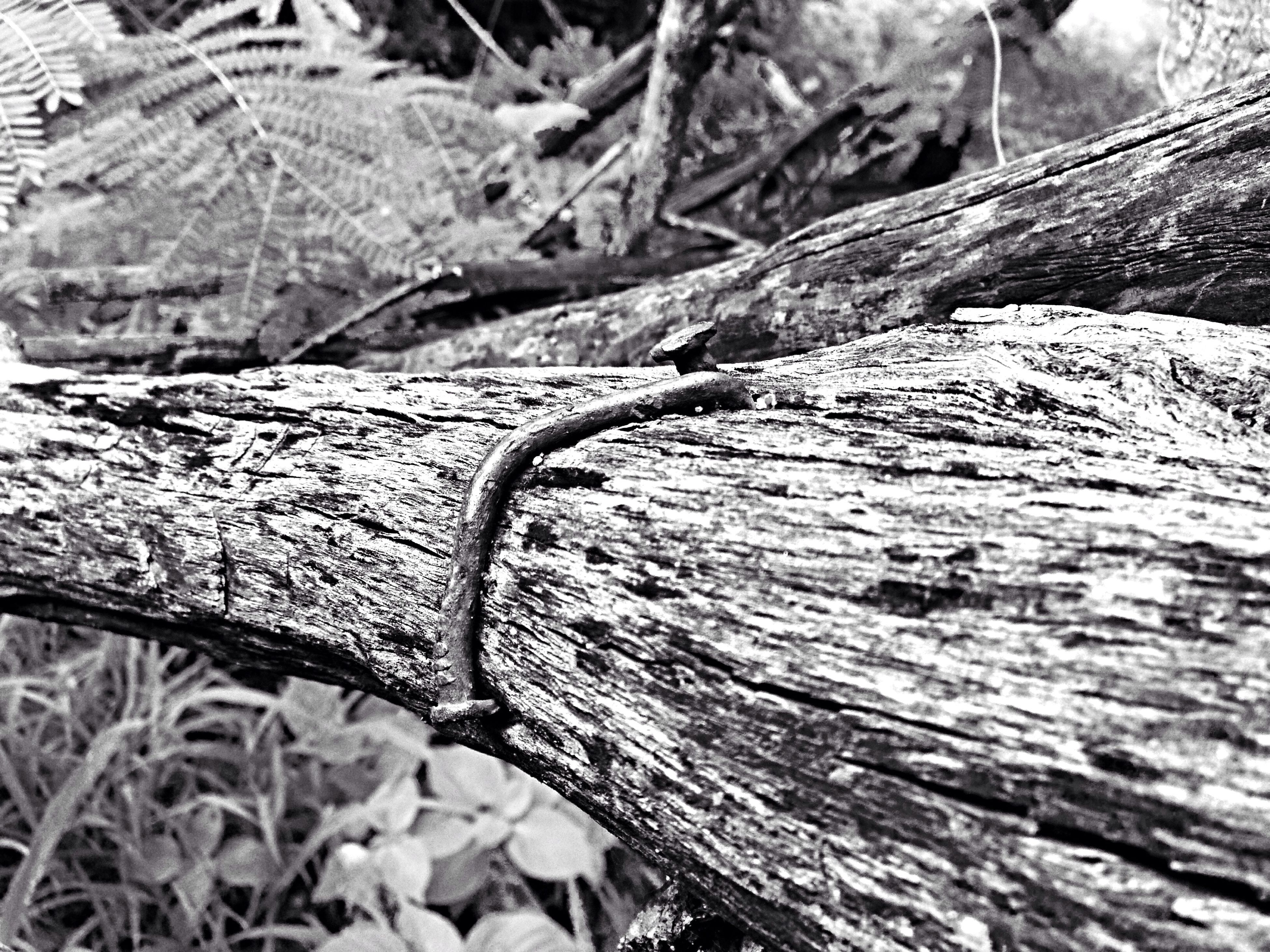 wood - material, textured, tree trunk, nature, tree, forest, close-up, tranquility, log, focus on foreground, outdoors, day, rough, wood, rock - object, natural pattern, tree stump, no people, dry, beauty in nature