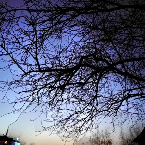 Tree Nature Low Angle View Branch Sky Bare Tree Beauty In Nature No People Silhouette Tranquility Outdoors Growth Backgrounds Clear Sky Treetop Day Point Of View Nature Weather Winter Staring At The Sky Muddled Past Zweige Welcome To Black