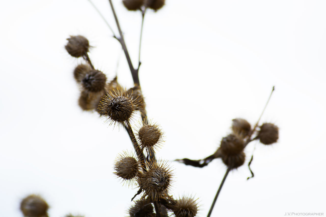 Branches Close-up Day Dry Dry Flower  Dryed Dryed Flower Flower Flower Head Flowers Focus On Foreground Nature Nature Nature Photography Nature_collection Naturelovers No People Outdoors Plant Plants