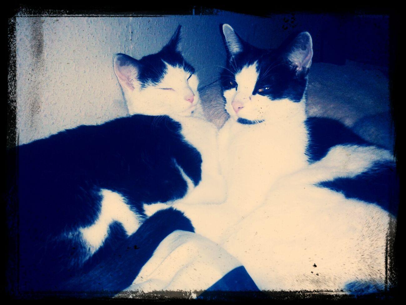 unsere zwei süßen ♥