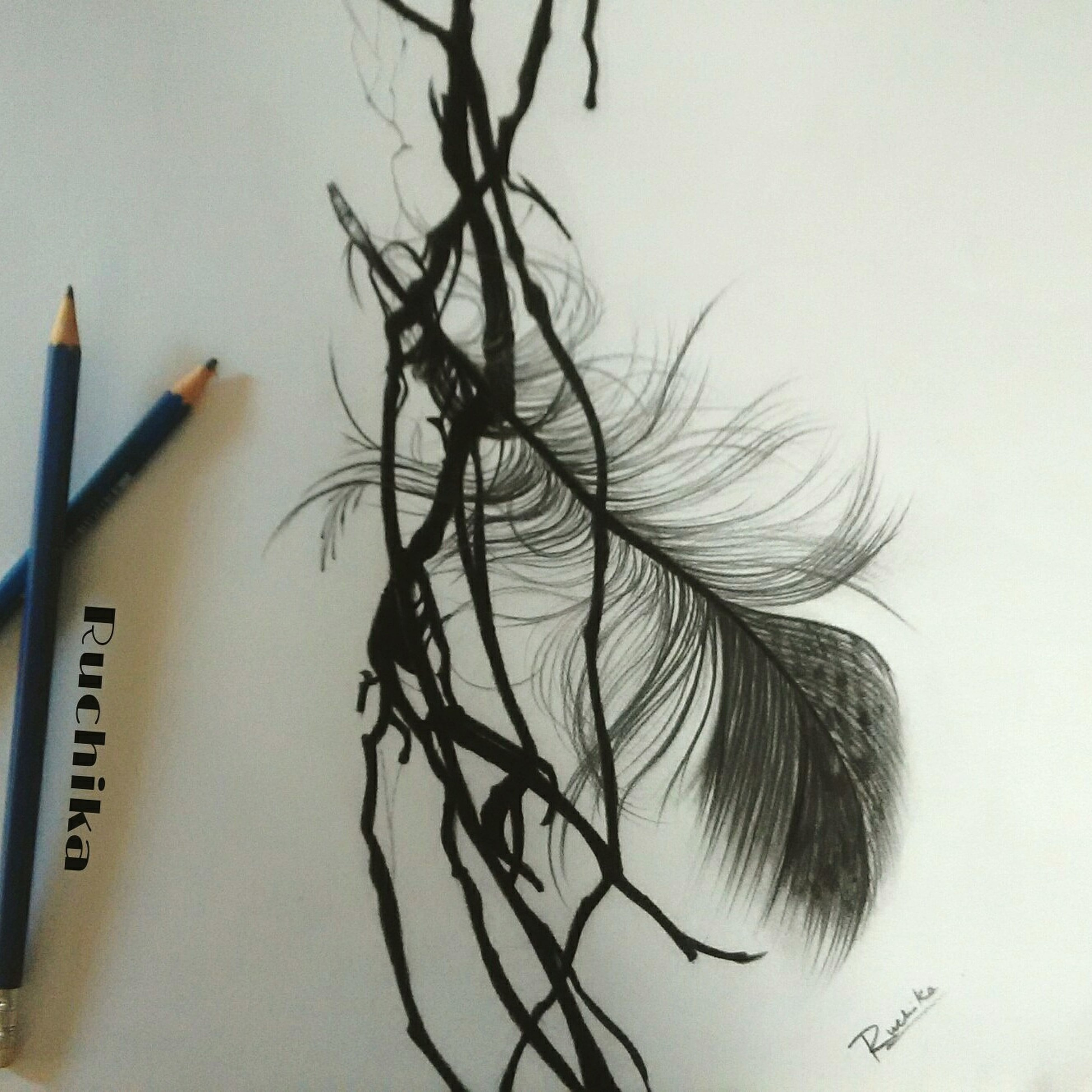 Freedom ArtWork Art MyfirstEyemphoto Feathers Feather  Check This Out Pictureoftheday Draw Art, Drawing, Creativity Drawing ✏ Pencil Drawing Pencil Sketch  My Drawings My Draw ♥ Artist Ruchika_arts