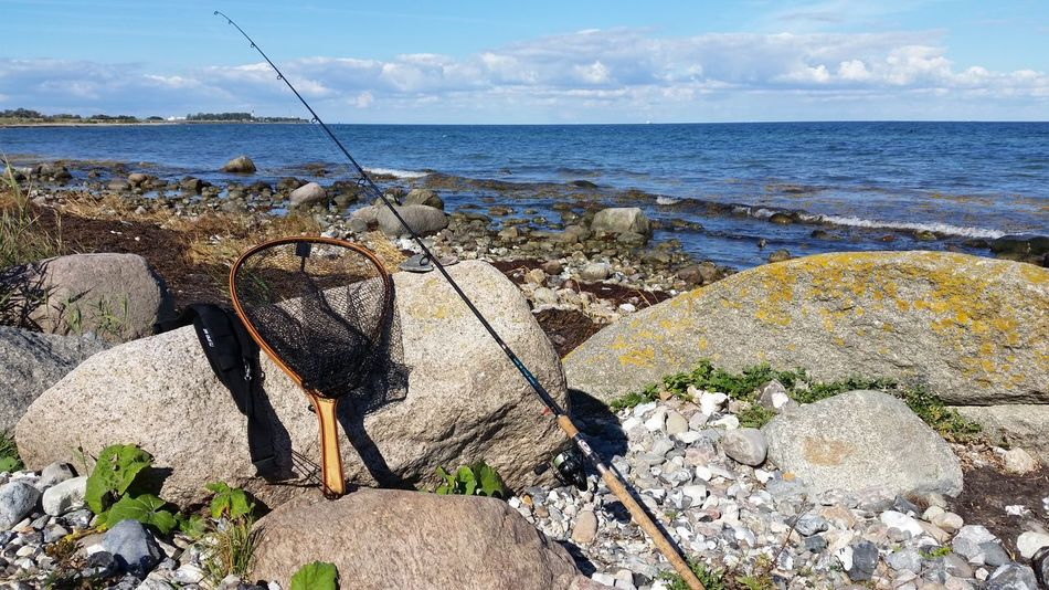 Gone Fishing Sea Baltic Sea Fehmarn Seatroutfishing Horizon Over Water Water Tranquil Scene One Animal Tranquility Scenics Full Length Sky Non-urban Scene Nature Solitude Beauty In Nature Domestic Animals Mammal Day Cloud Remote Summer Calm