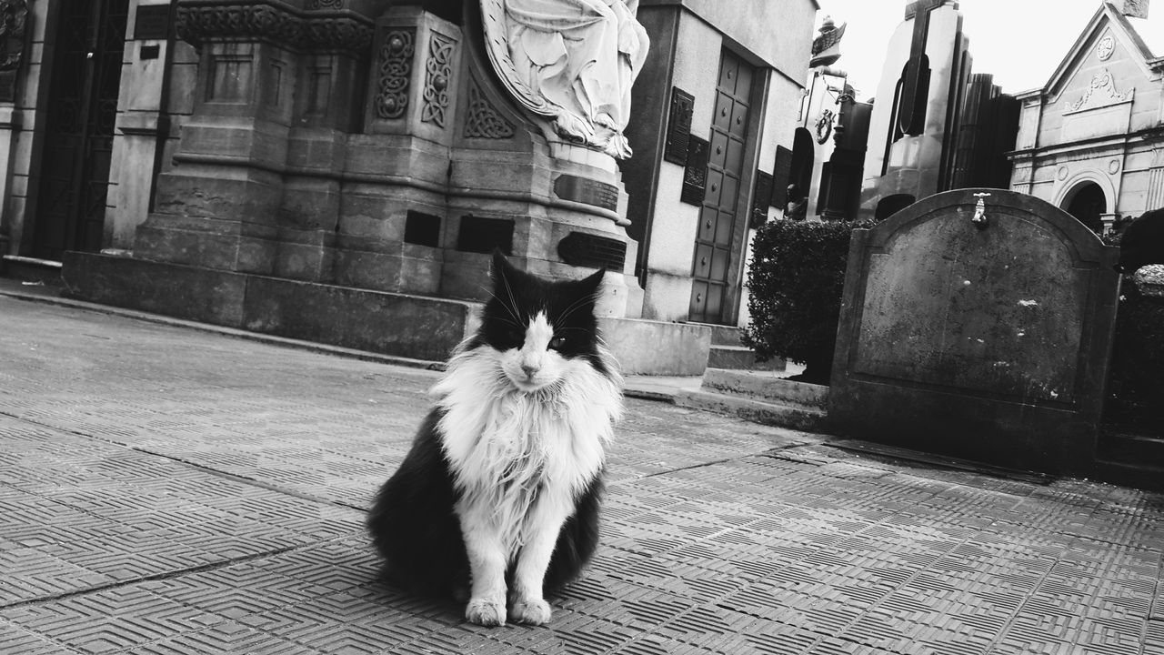 Cat in graveyard Cat VSCO Cam Black And White Photography Graveyard Sculpture Bright Observing Architecture Cementerio De La Recoleta Recoleta Buenos Aires, Argentina  Buenos Aires Emblematic Places Buenos Aires, Recoleta