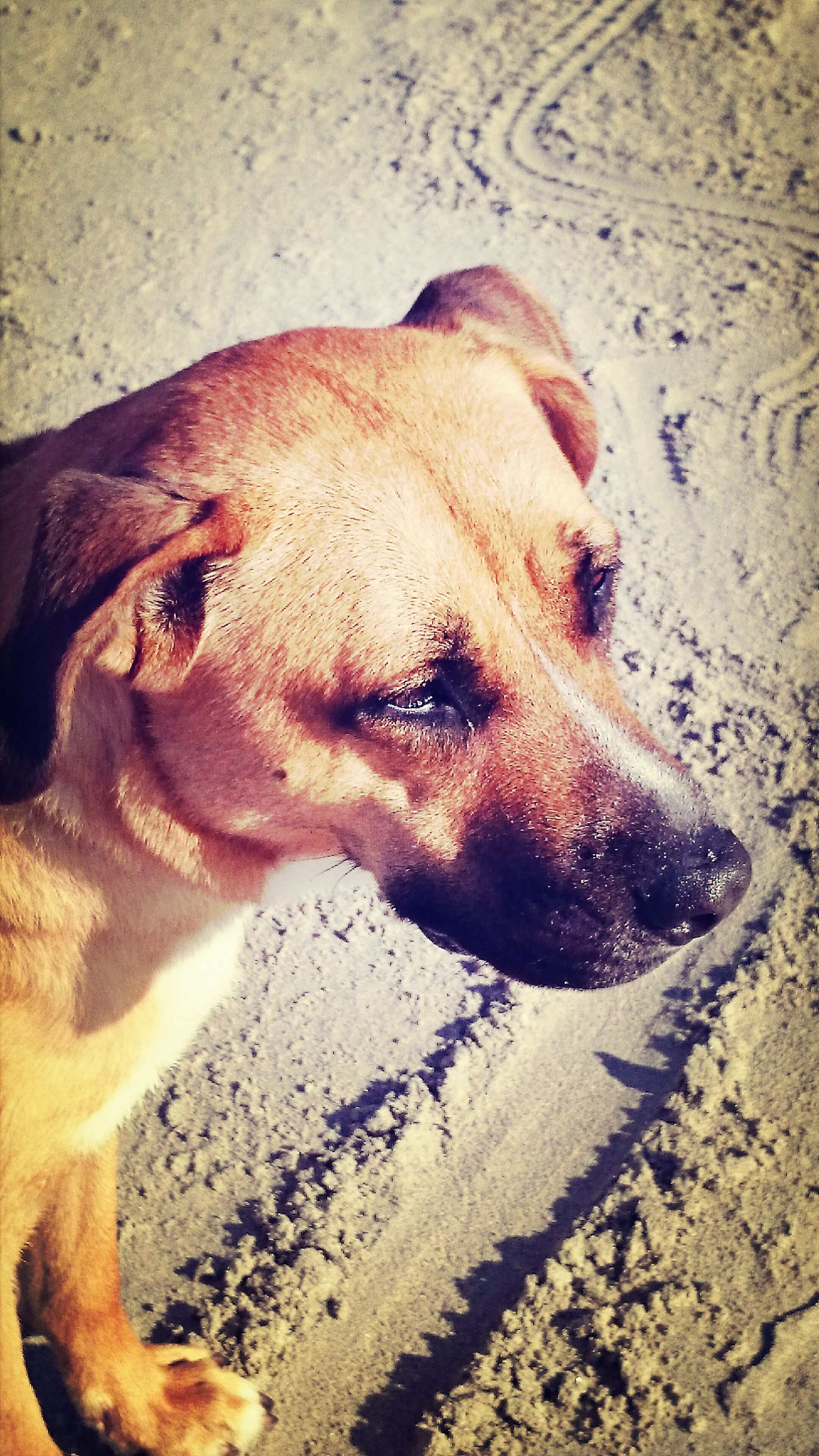 high angle view, close-up, lifestyles, dog, sunlight, shadow, sand, leisure activity, portrait, day, headshot, indoors, part of, street, looking at camera, domestic animals