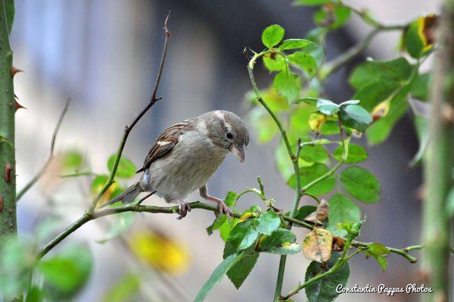 Birds Bird Bird Photography Birds_collection Birds Of EyeEm  Birds🐦⛅ Birds_n_branches The Essence Of Summer.