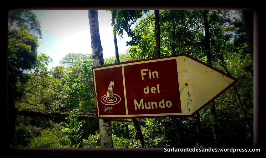 Auto Post Production Filter Branch Colombia Communication Day Direction Directional Sign Green Green Color Growth Lush Foliage Mocoa Outdoors Plant Sign Signboard Symbol Text Transfer Print Tree Trekking