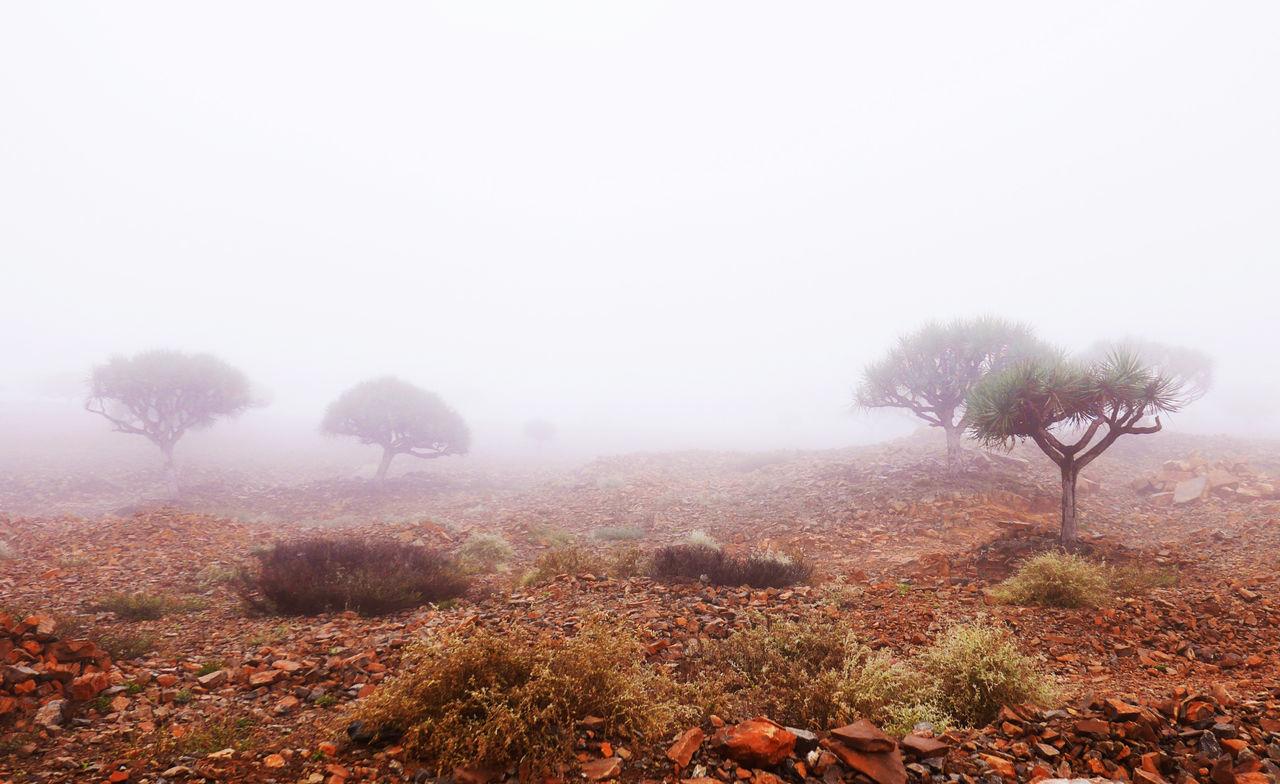 Ethiopia Fog Landscape Mist Nature Nature Outdoors Strange Landscape Taking Photos Tranquil Scene Tranquility Tree First Eyeem Photo