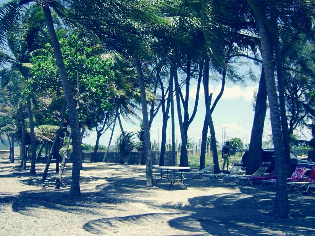 This Is Haiti Cap Haitien Missing Haiti Haiti Beautiful Trees Palm Trees