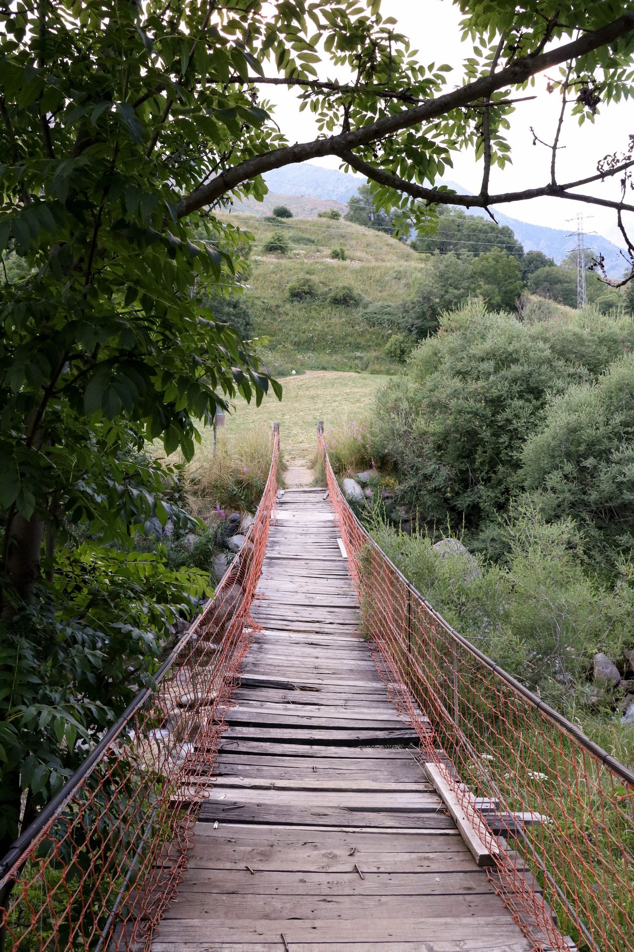 Bridge Tree Planks Tranquil Scene Landscape Tranquility Nature Wooden Plant Branch Scenics Field Footbridge Day Narrow Non-urban Scene Boardwalk Outdoors