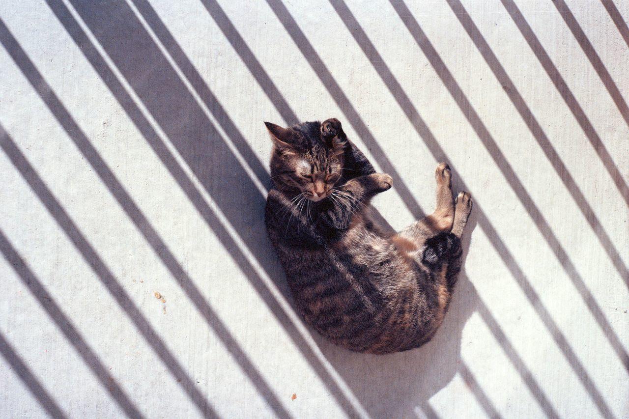 Beautiful stock photos of kitty, Animal Themes, Cat, Close-Up, Feline