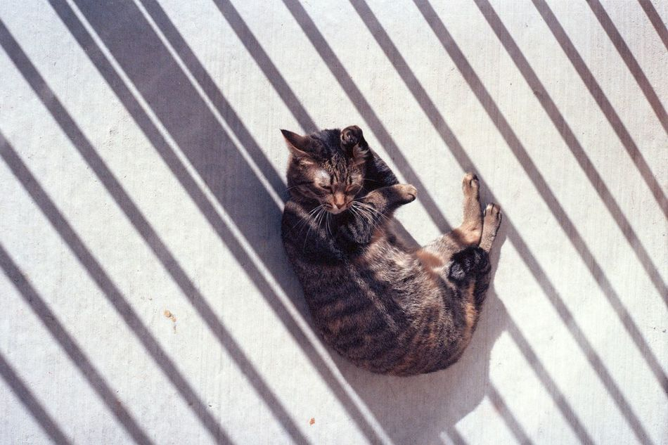 Beautiful stock photos of floor, Animal Themes, Cat, Close-Up, Feline