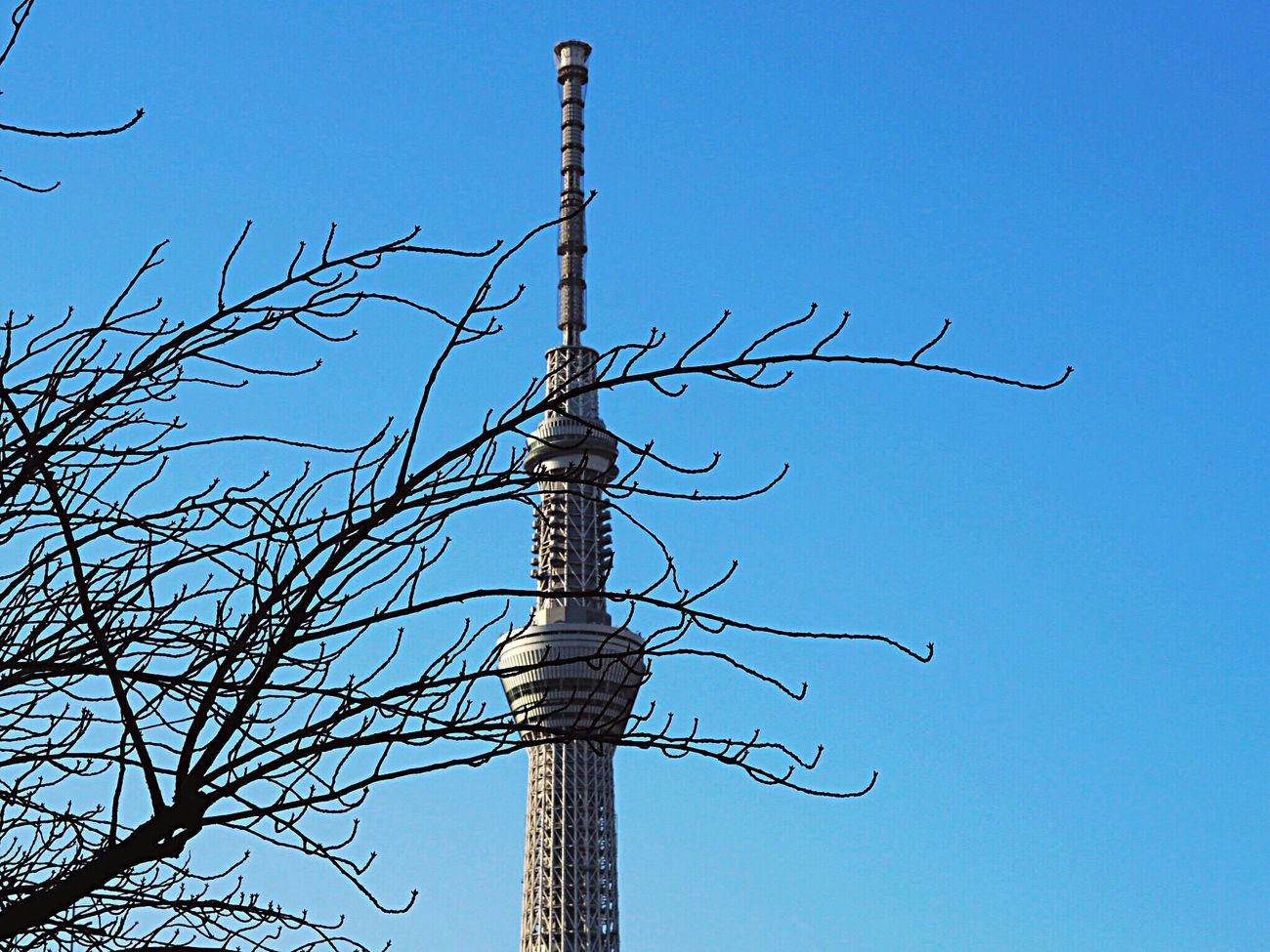 Clear Sky Blue Bare Tree Sky Tree Nature Beauty In Nature Tokyoskytree Kameido Tenjin Kameido Tokyonature Tokyo,Japan Olympus Om-d E-m10 Tokyo Sky Tree