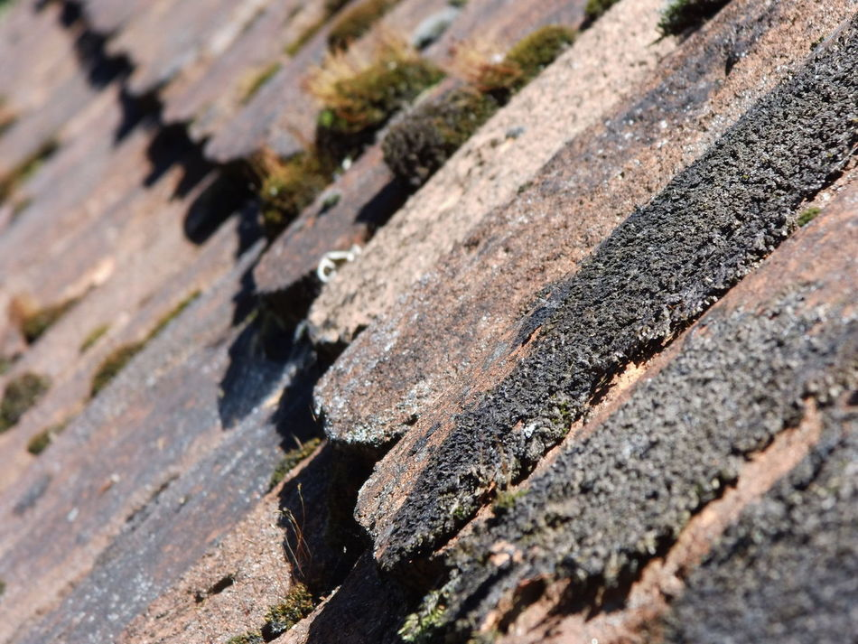 Ancient Ancient Rooftop Backgrounds Close-up Historic Roof Selective Focus Shingles Sweden Wooden Roof EyeEmNewHere