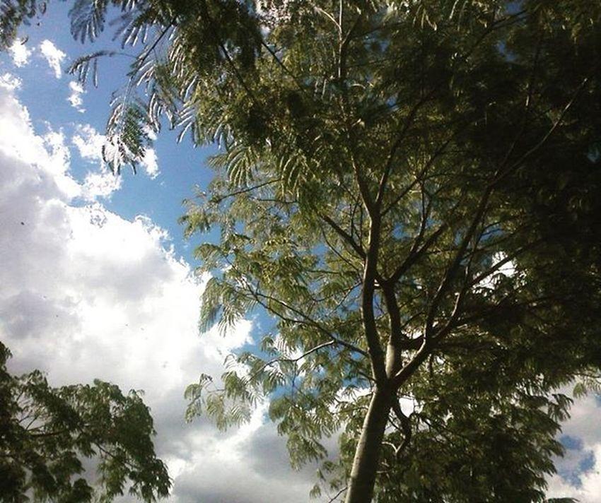 Nature ^-^ Sky Three Skylight Nature Peaceful Alive  Hippielove