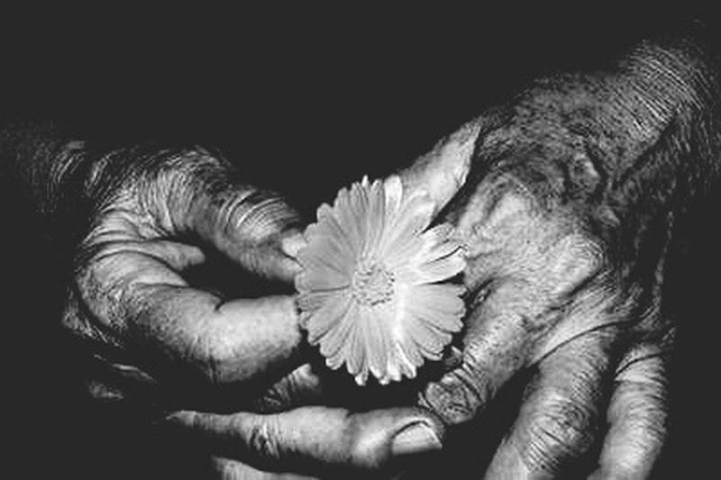 Human Hand , Mãos Que Curam...