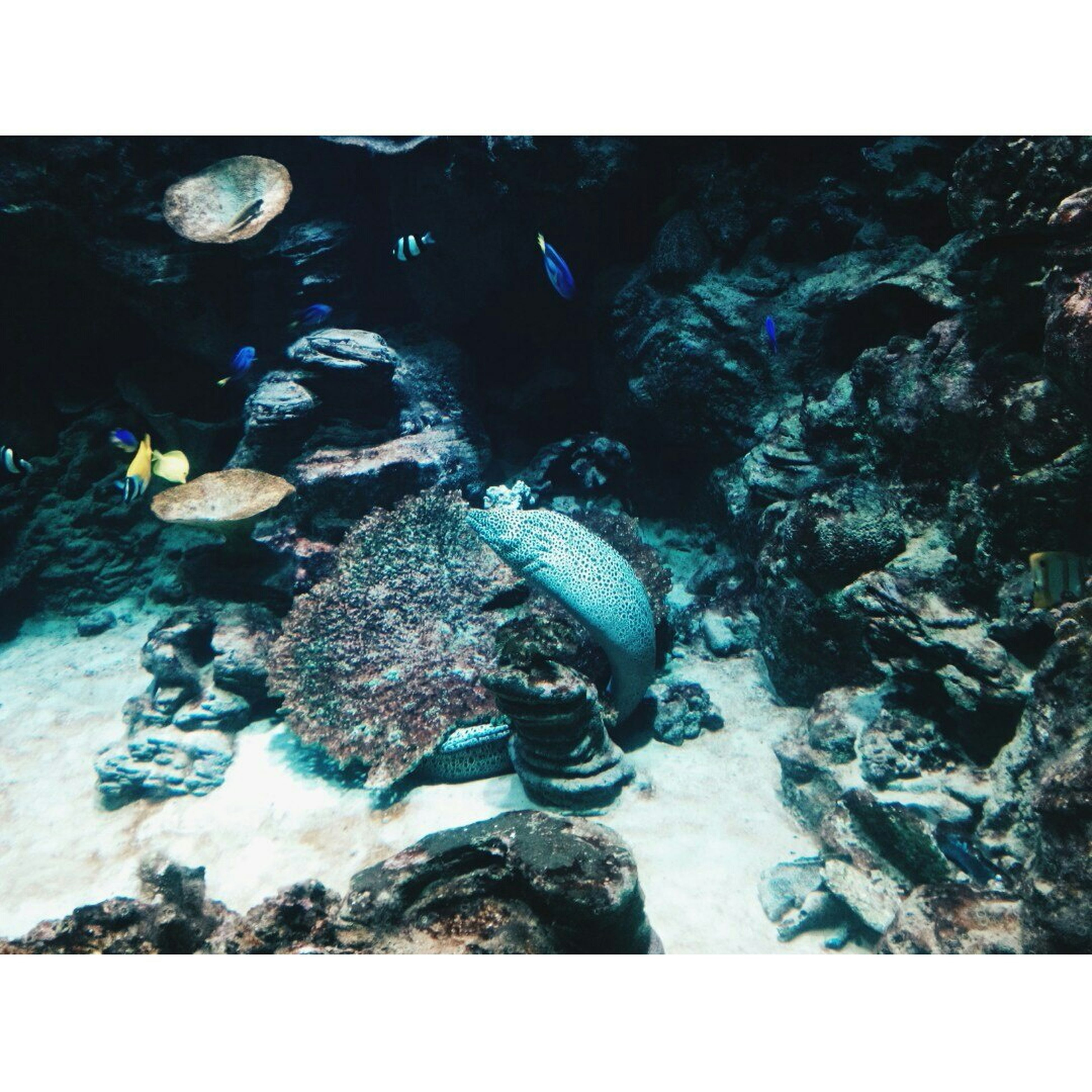 transfer print, water, auto post production filter, sea, rock - object, underwater, high angle view, sea life, nature, swimming, stone - object, rock, animal themes, outdoors, fish, wildlife, day, beach, sunlight, undersea