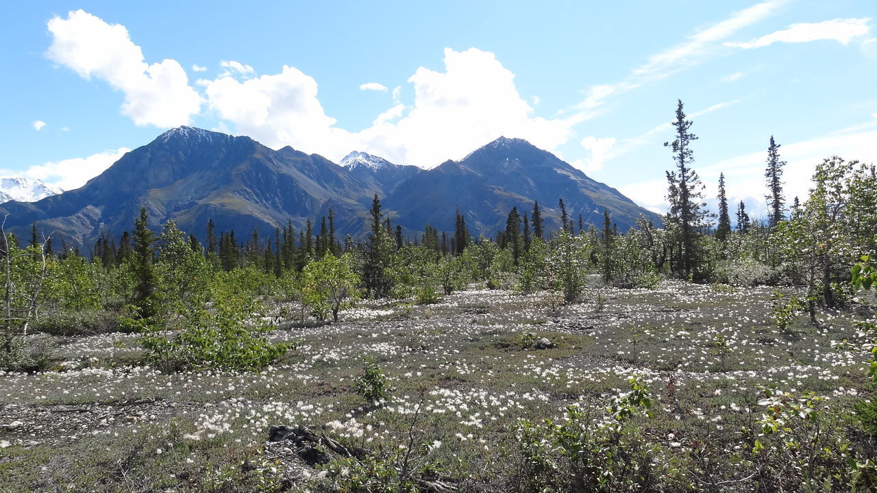 Beauty In Nature Canada Cloud - Sky Day Forest Growth Kluane National Park & Reserve Landscape Mountain Nature No People Outdoors Scenics Sky Tranquility Tree Yukon