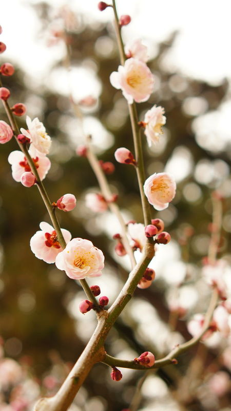 Une Flowers