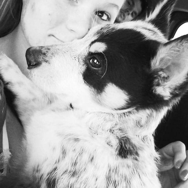 Healer Puppy Summer Dogs Awww Summer Rodeo
