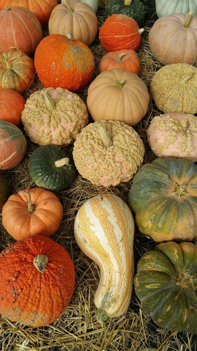 isplay of autumn squash at a farmer's market Abundance Arrangement Backgrounds Choice Close-up Food Food And Drink For Sale Freshness Full Frame Healthy Eating Heap In A Row Large Group Of Objects Market Orange Color Order Organic Pumpkin Repetition Retail  Selling Stack Variation Vegetable