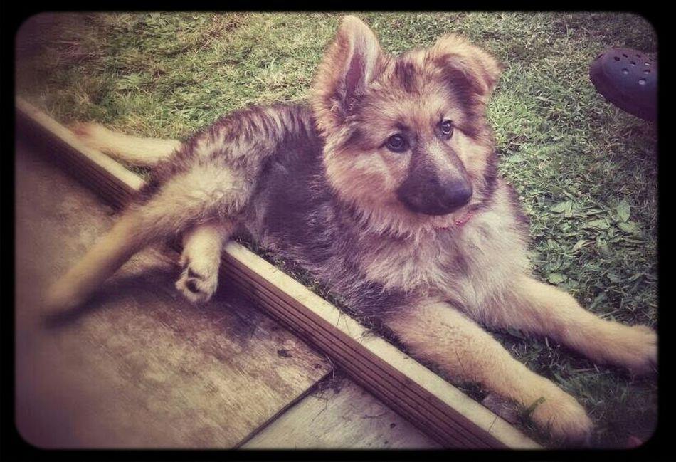 puppy looking cute First Eyeem Photo