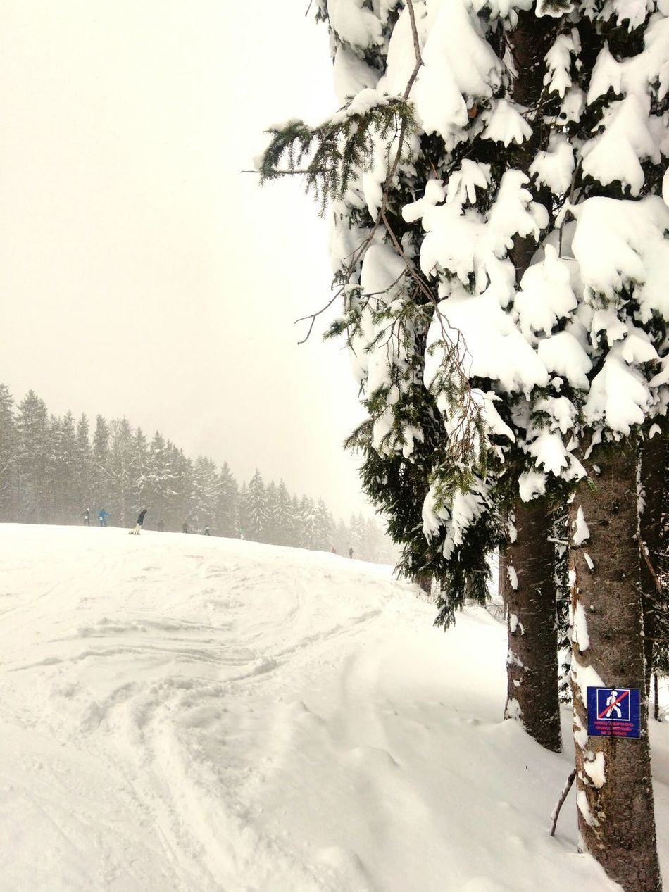 Winter Snow Tree Cold Temperature Pinaceae Pine Tree Deep Snow Pine Woodland Beauty In Nature Nature Bukovel Vacation Vacation Time Freesoul Cold Winter ❄⛄ Landscape No People Snowing Day Nature Take Photos Eyem Best Shots Winterart Outdoors Sky