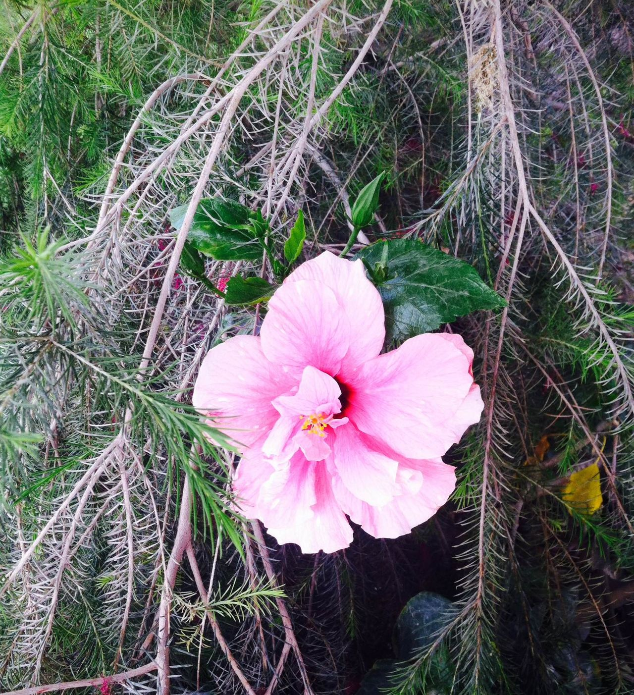 Air Breeze Day Flower Freshness Nature Pink Simple Beauty Simple Photography Tree