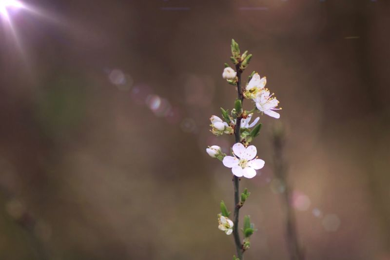 Spring is on the way. First Eyeem Photo Nature Nature Photography Blossom Spring Macro