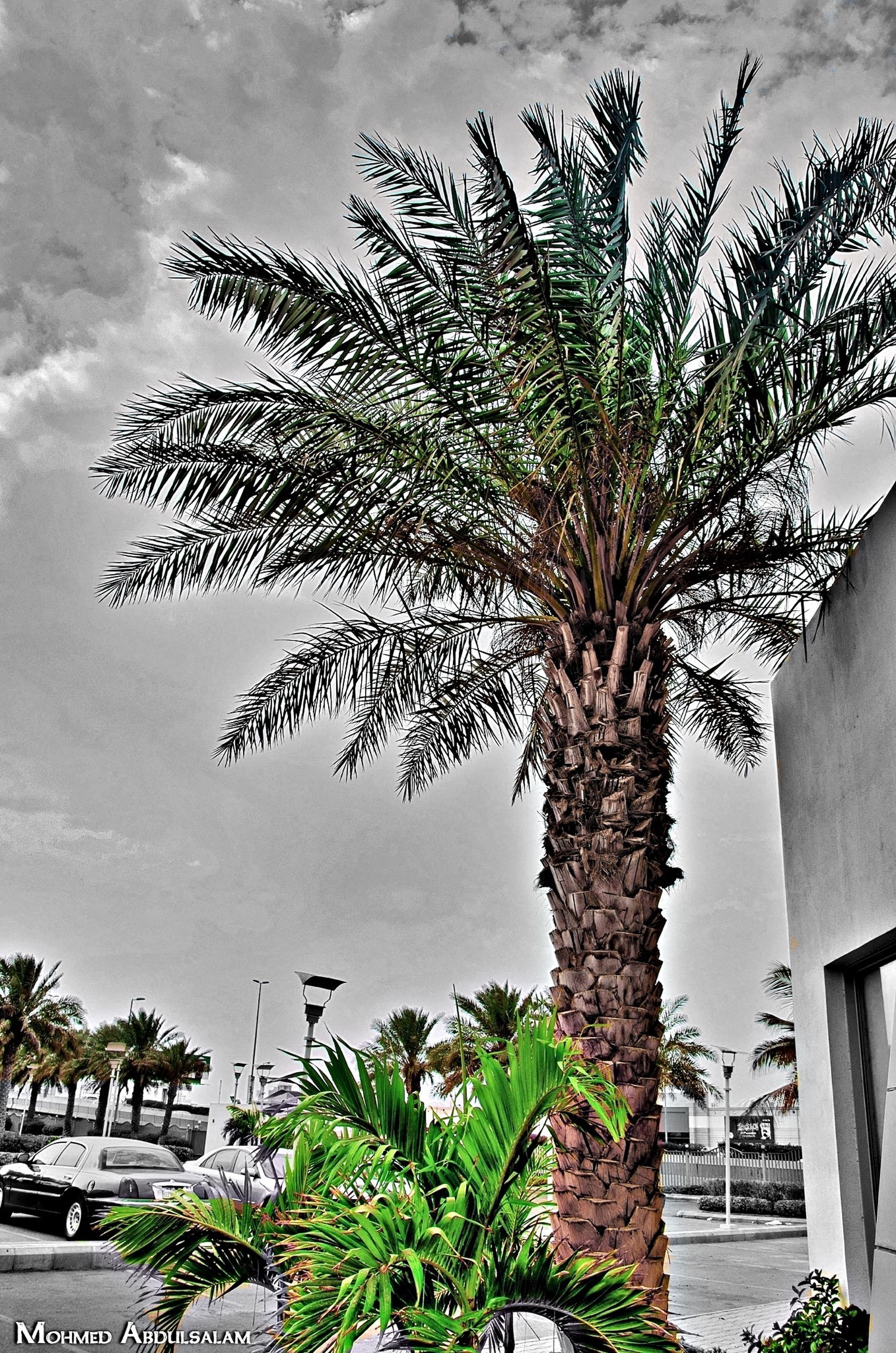 building exterior, growth, tree, built structure, architecture, sky, palm tree, plant, house, nature, growing, cloud - sky, branch, low angle view, leaf, green color, day, cloud, no people, outdoors