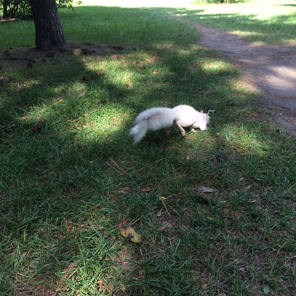 Albino Squirrel Animal Themes Canada Domestic Animals Moving On No People One Animal Outdoors The Way Forward White Animal White Squirrel リス リスの後ろ姿 白い動物 白リス