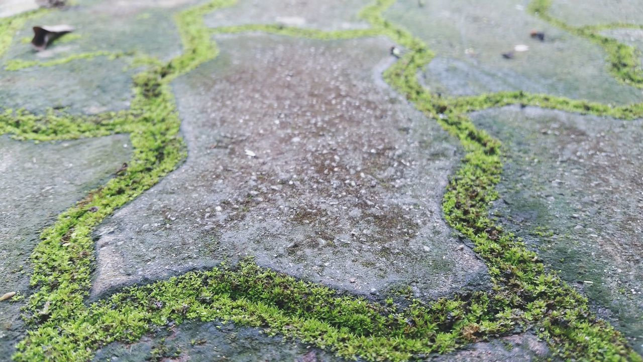 Wet Moss Moss-covered Mossed Brick Simple Photography Simple Beauty Nature