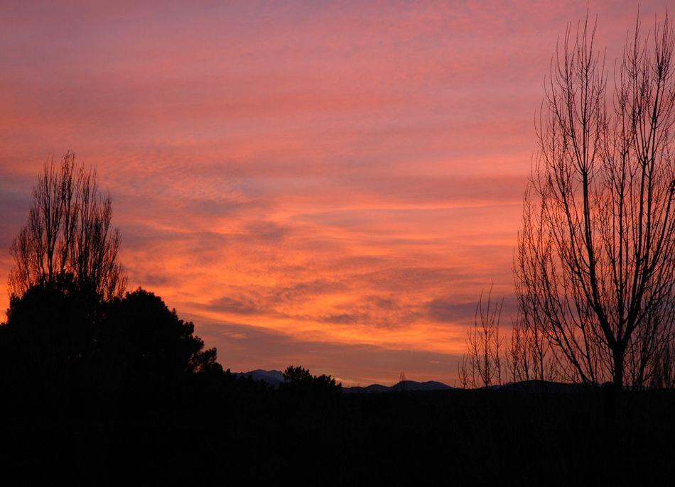 Atmosphere Cloud Cloud - Sky Cloudy Dramatic Sky Poplars Silhouette Sky Sunset