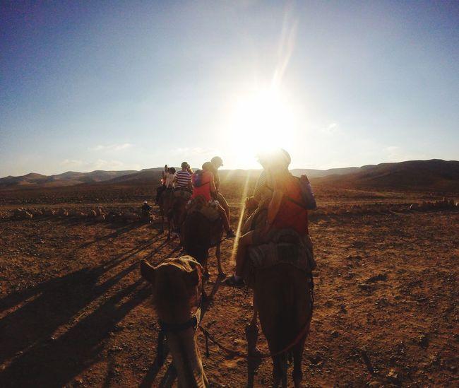 Israel Camel Ierusalim Bedouin Haifa Zefat Jerusalem Jerusalem❤ Jerusalemoftheday Jerusalem Israel Jerusalemdaily Amiad