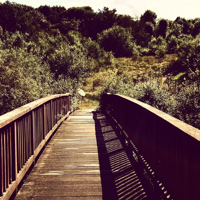 Boardwalk Day Field Footpath Formal Garden Growth No People Outdoors Park - Man Made Space Railing Shadow Steps Sunlight Sunny The Way Forward Tranquil Scene Tranquility Tree