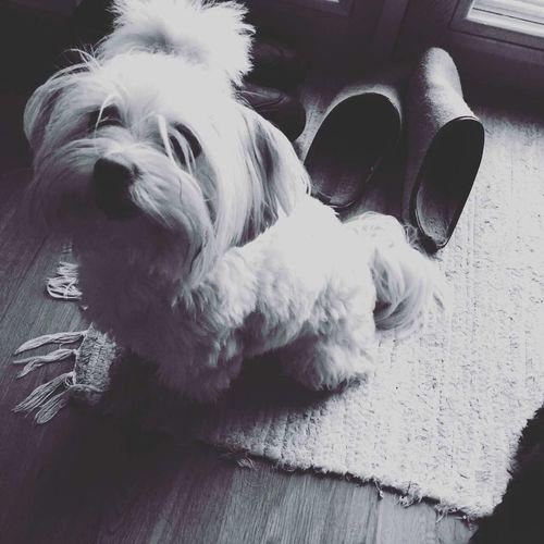 My best friend dog Lota..