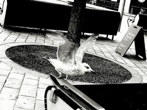 Full Length Childhood Side View Outdoors City Life Bird Landing Birds🐦⛅ Gull