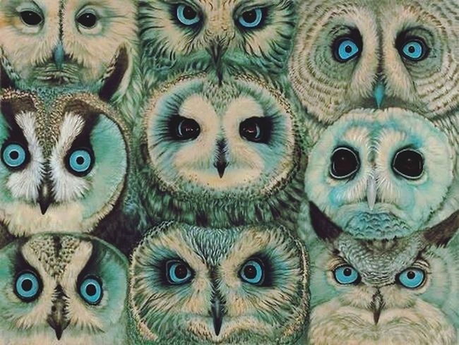 Lechuzeando! Cute Animals Really???