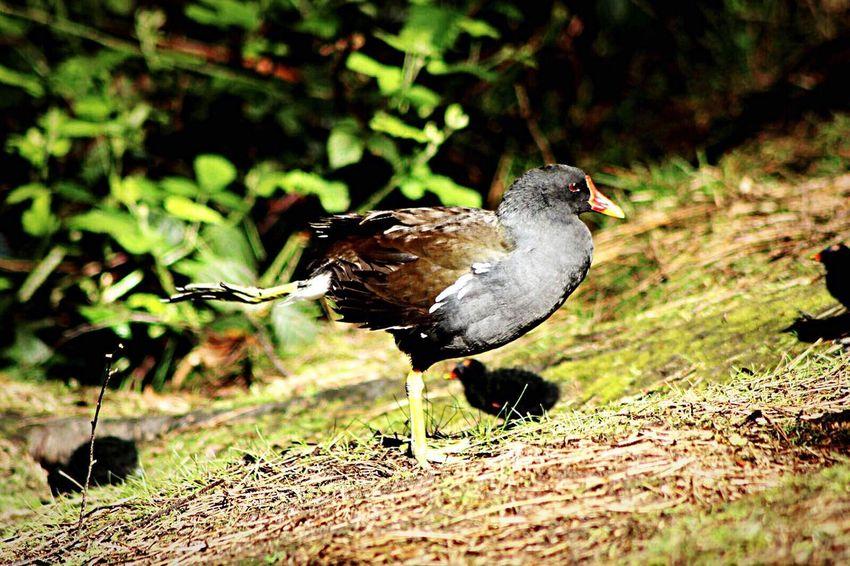 Bird Photography Animals In The Wild One Animal Animal Wildlife No People Bird Animal Themes Stretching Bird