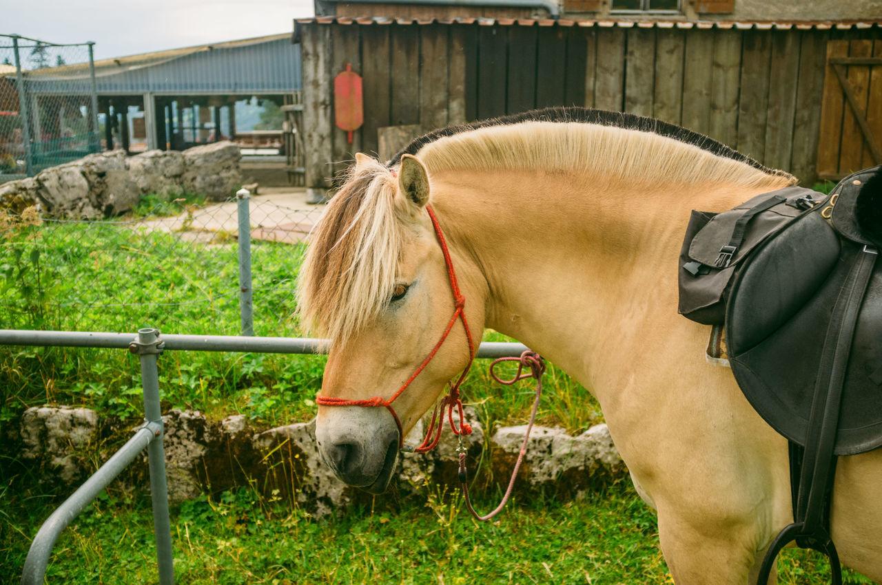 Day Domestic Animals Greenery Hiking Horses Lausanne Mammal Outdoors Swiss Alps Swiss Mountains Switzerland