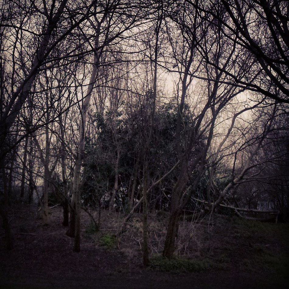 Wood WoodLand Bushes Scary blackmetal blackmetalistkrieg branches