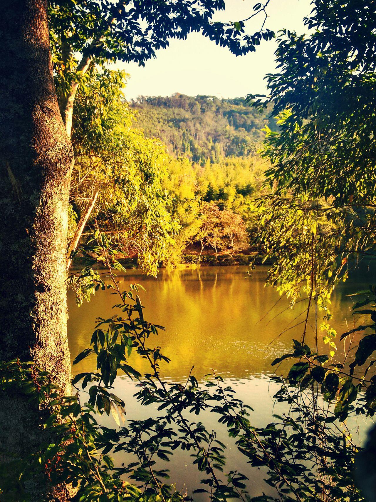 Branches Lightsun Yellow Photography Lake Beautiful Nature Nature_collection Beautifulday Sundaymorning