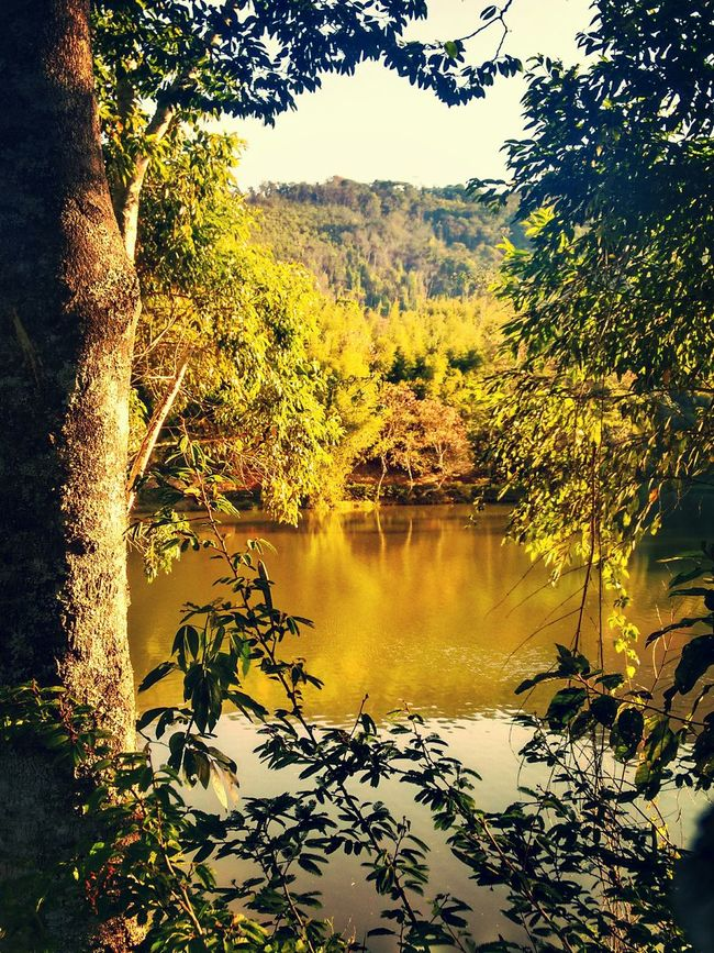 Branches Lightsun Yellow Photography Lake Beautiful Nature Nature_collection Beautifulday Sundaymorning