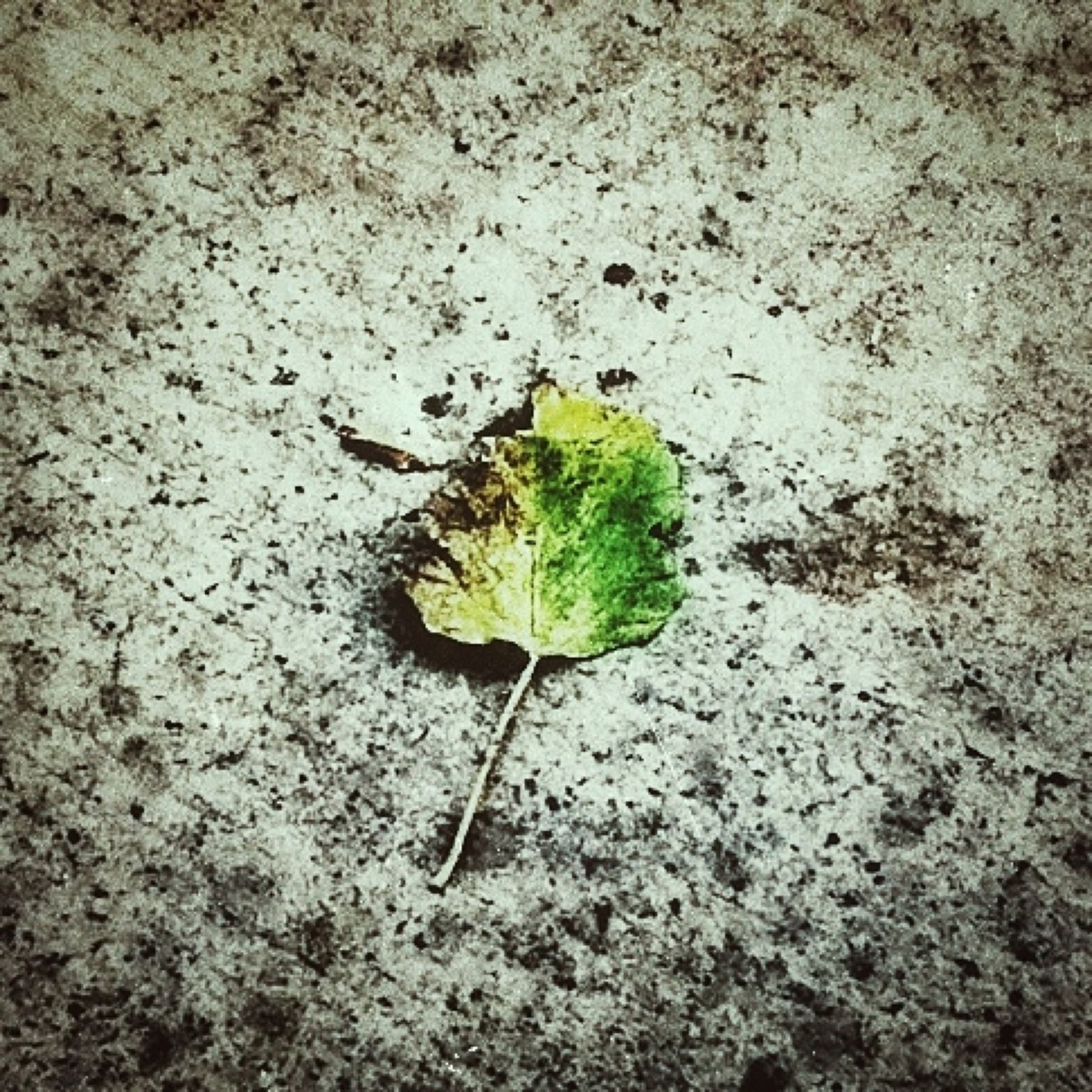 leaf, growth, plant, close-up, green color, nature, high angle view, fragility, stem, ground, day, freshness, no people, outdoors, growing, new life, beginnings, wall - building feature, green, beauty in nature